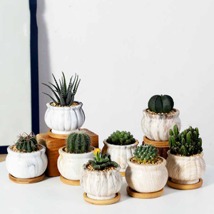 Flowerpot Ceramic Succulent Flowerpot Water Transfer Printing Home Gardening Decoration