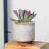 Ice Cracked Mini Desk Combination of Meat Small Fresh Color Ceramic Flowerpot